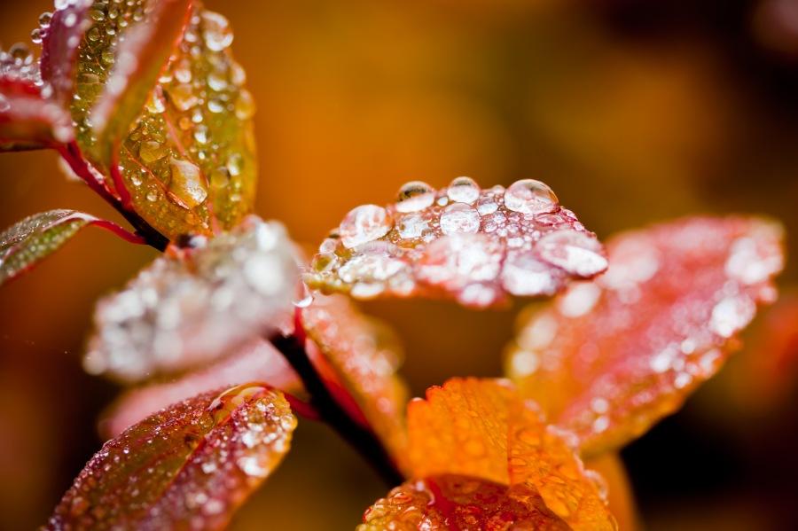 stockvault-autumn-foliage148214